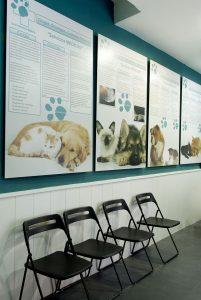 Otras vacunas para gatos en Madrid