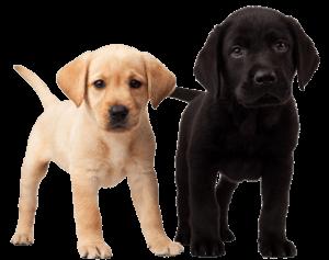 vacunas para cachorro